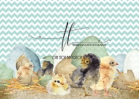 Easter Chicks 3