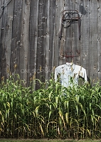 Scarecrow Wall