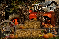 Pumpkin Farm 1