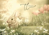 Spring Baby Bunny 2