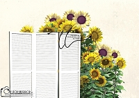 FLORAL SCREEN sunflowers